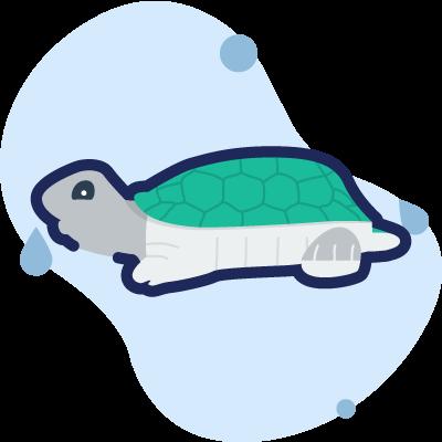 termometro a tartaruga